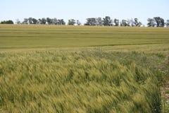 Crop fields Stock Photos