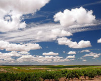 Crops and clouds. Crop fields under a blue sky with white clouds stock images