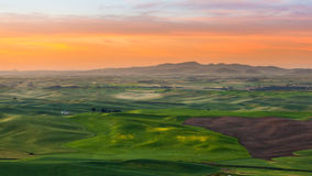 Crop filed in Palouse in a beautiful morning Stock Photos