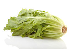 Crop of fresh endive Royalty Free Stock Photos