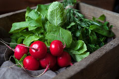 Crop of fresh radishes healthy organic vegetarian food rustic style. Crop of fresh radishes healthy organic vegetarian food in vintage wooden basket. Rustic Royalty Free Stock Photo