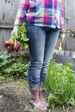 Crop fresh radishes. Woman in jeans holding fresh radishes in the garden Stock Images