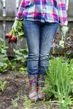 Crop fresh radishes. Woman in jeans holding fresh radishes in the garden Stock Photography