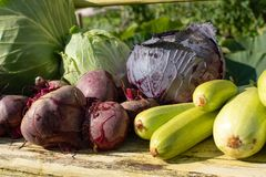 A crop of fresh vegetables lies on a bench in the open air. Fresh vegetables lie in the open air. Cabbage, eggplants, greens,beet royalty free stock photos
