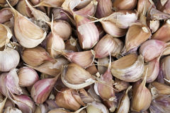 Crop of garlic background. Closeup. Royalty Free Stock Photos