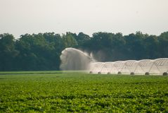 Watering the field royalty free stock images