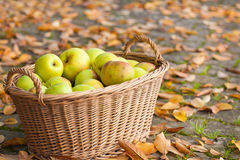 Crop of green apples in basket Stock Photos