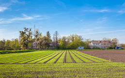 Crop growth on farmland Stock Images