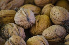 Crop harvested walnuts Stock Photos