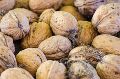 Crop harvested walnuts Stock Photo