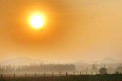 Crop and hill in Heavy fog with morning sun light. Stock Images