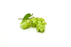Crop of hop Royalty Free Stock Image