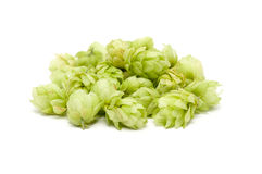 Crop of hop Stock Images