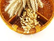 Free Crop In Basket Royalty Free Stock Photos - 3216608
