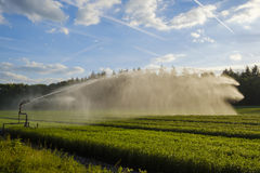 Crop irrigation with a water cannon Royalty Free Stock Photo