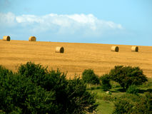 Crop landscape with hay bales Stock Photo