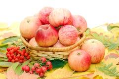 Crop Of Apples Stock Image