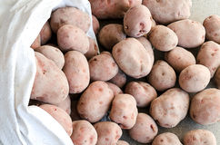 Crop of potatoes Stock Photo