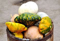 The crop of pumpkin is reaped in a wooden barrel Royalty Free Stock Photo