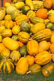 Crop of pumpkins Royalty Free Stock Photography