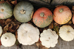 Crop of pumpkins and bush pumpkins Stock Image