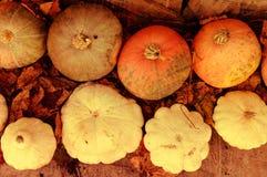 Crop of pumpkins and bush pumpkins Royalty Free Stock Photo