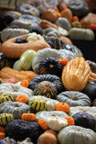 Crop of pumpkins, squash and gourd Royalty Free Stock Image