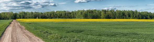 Crop and rapeseed field panorama, nature background Royalty Free Stock Photography