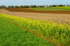 Crop rotation fields. Growing of a series of different types of crops in the same area in sequential seasons. Farmland in Germany at fall Stock Image