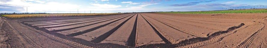 Crop Rows - Panorama Stock Photos