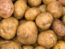 Crop of tubers of a potato Stock Photography