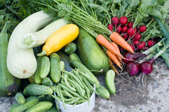 Crop of vegetables. Piled on the earth royalty free stock image