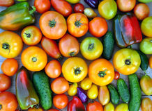 Crop of yellow and red tomatoes, cucumbers, sweet peppers. Royalty Free Stock Photography