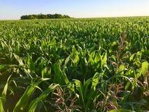 Cropland в Ennis Техасе Стоковое Изображение