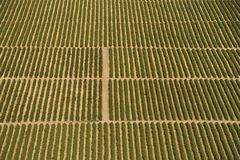 Cropland. Aerial view of farmland with rows of crops stock photography