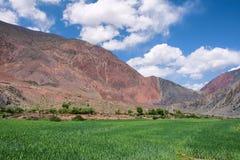 Cropland im Berg Lizenzfreie Stockbilder