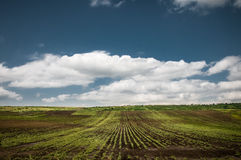 Cropland. Landscape with field and beautiful blue sky with white clouds royalty free stock images