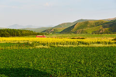 The cropland. The photo was taken in 203 provincial road Hinggan League, Inner Mongolia Autonomous,China stock image