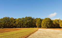 Cropland and Trees. Farmland with trees in the background royalty free stock image