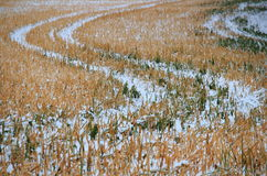 Cropland winter scenery Royalty Free Stock Images
