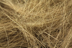 Cropped blond hair  background Royalty Free Stock Photo