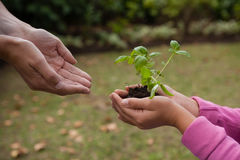 Cropped cupped hands of mother with girl holding seedling Stock Photos