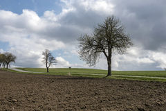A cropped field on a road with trees under storm clouds Stock Photography