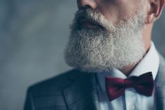 Cropped half-turned close up photo of grey groomed chic volume l. Ush long elegant hipster curly trendy elite old man`s beard, well-dressed with maroon bow-tie Stock Photography