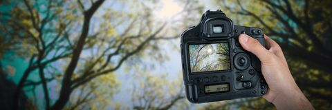 Composite image of cropped hand of photographer holding camera. Cropped hand of photographer holding camera  against green trees in the forest Stock Photography