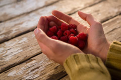 Cropped hand of woman holding raspberries. At table Stock Photo