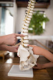 Cropped hands of female therapist and boy pointing at artificial spine. In hospital ward Royalty Free Stock Photo