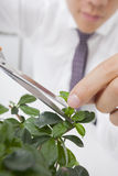 Cropped image of Asian businessman pruning plant Royalty Free Stock Photos