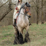 Cropped image of brave woman in armor on a horse stock photography