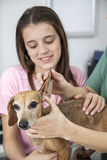Cropped Image Doctor Examining Dachshund's Ear By Girl Royalty Free Stock Photos